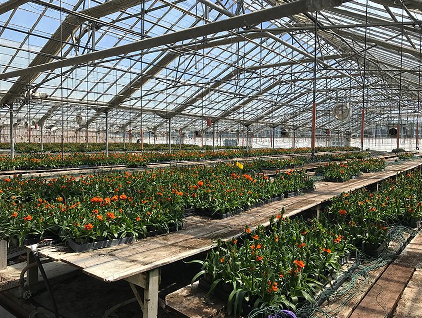 citrus_greenhouse_enterprise_artemis